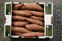 Salsabeel Sweet Potato