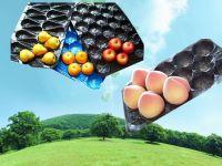 29x39cm/39x59cm PP Tray For Fruit Packaging