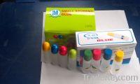 glue&gum