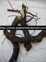 Polyalthia Bullata ( Black Tongkat Ali)