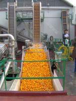 Turnkey Industrial Citrus/Orange Juice Processing Line/Machine