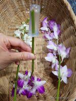 """""""Orchid tube"""" - plastic flower tube"""