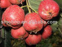 Hawthorn Extract
