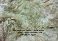 Back Washed Egypt Wool