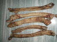 DRY Trachea
