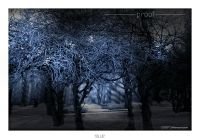 Photography - Wall Art - Pictures - Images