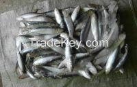 frozen sardine bite
