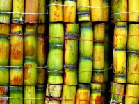 ICUMSA Sugar 45, 100 & 150 - Brazil