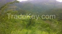 Beautiful Land for investment