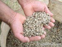 Wild Timor Coffee