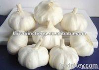 Laiwu fresh garlic