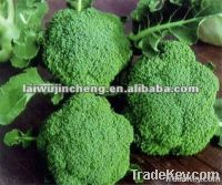 fresh broccoli on sale