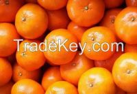 mandarin(kinnow)