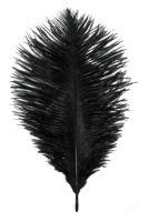 Highland Cap Feather