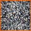 Jatropha seeds supplier and exporter for high germination
