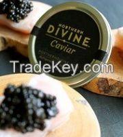 Northern Divine Sturgeon Caviar