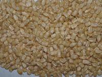 gmo white corn importers,gmo white corn buyers,gmo white corn importer,buy gmo white corn,gmo white corn buyer,