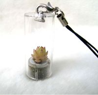 pet tree, mini garden, with plant,pocket plant