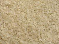 BASMATI RICE EXPORTER| KERNAL RICE WHOLESALER| WHITE RICE MANUFACTURER| LONG GRAIN TRADER| PARBOILED RICE IMPORTERS