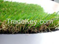 Sports Field Grass