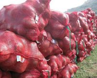 Natural Fresh Red Onions for Sale at Low Market Price