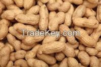 FRESH PEANUTS IN SHELL/GROUNDNUTS WITH SHELL/RAW PEANUTS WITH SHELLPeanuts