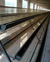 Battery Layer Chicken Cage/broiler cages - A/H Type