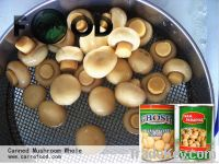 Canned Mushroom piece and stems