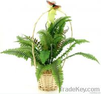 Sell Willow Flower Plant Basket Pot