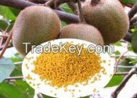 Granular Nitrogen Fertilizer