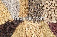 Sesame seeds, chia seeds, sunflower seeds,hemp seeds,black pepper seeds,vanilla seed pods,saffron seeds,Watermelon seeds