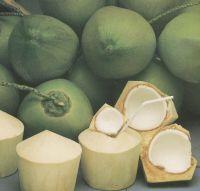 coconut fruit fresh