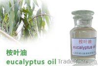 Organic Eucalyptus Oil, Eucalyptus essential oil, Pure eucalyptus Oil