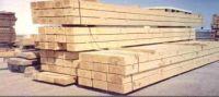Maritime Pine Log