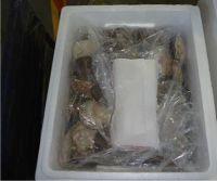 Hokkaido Scallops Live Frozen