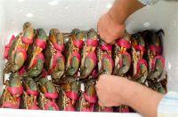 Mud Crab and Live Eel Fish