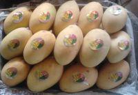 Sell fresh mango
