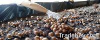 Agaricus Mushroom, blazei Murill, Himematsutake, Sun Mushroom Dried