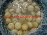 Salted/Brine Champignon Mushroom