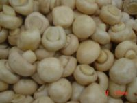 Champignon Mushrooms in Vinegar in Drum