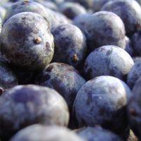 Acai Berry Extract Powder