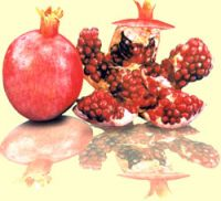 Strawberry , Watermelon, Pomegranate, Orange