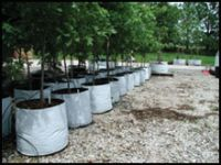 Organic trees and shrubs