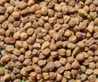Ethiopian chickpeas
