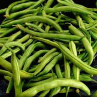 canned green cut beans