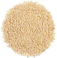 Millet French White