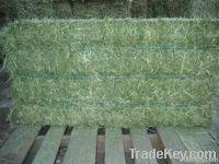Alfalfa Hay & Alfalfa Seeds