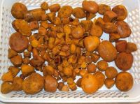 Cow Gall Stones / Ox Gallstones for Sale