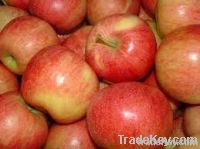 Premium Fresh Gala Apples