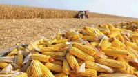 Yello White Corn